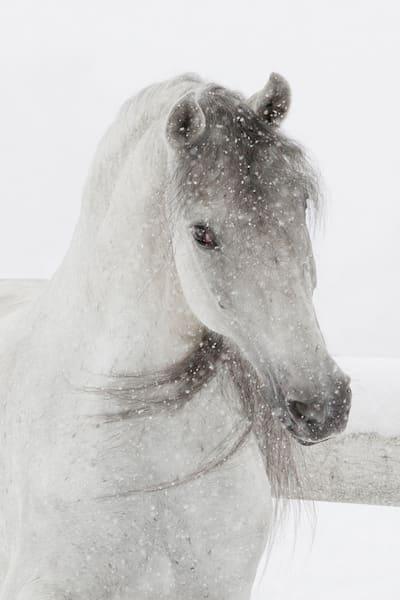 #11 Mischievous Snowy Mare Art | Living Images by Carol Walker, LLC