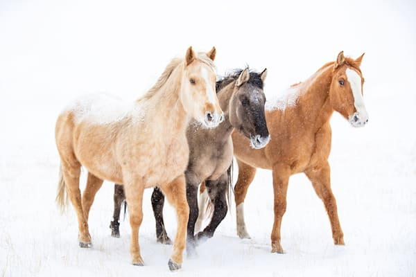 #16 Three Colorful Snow Horses Art | Living Images by Carol Walker, LLC