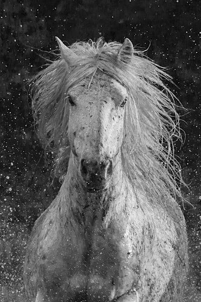 #18 Splash Art | Living Images by Carol Walker, LLC