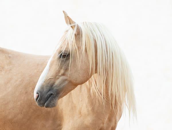 #24 Palomino Stallion Turns Art | Living Images by Carol Walker, LLC