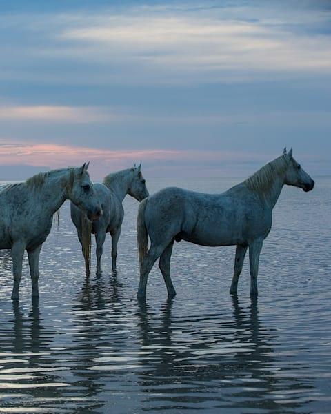 #26 Camargue Horses Waiting At Sunset Art | Living Images by Carol Walker, LLC