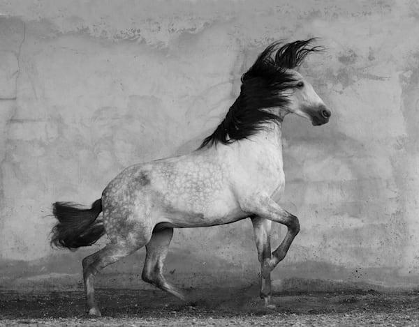 #32 Windstorm Art   Living Images by Carol Walker, LLC