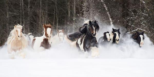 #38 Snowy Gypsies Run Art   Living Images by Carol Walker, LLC