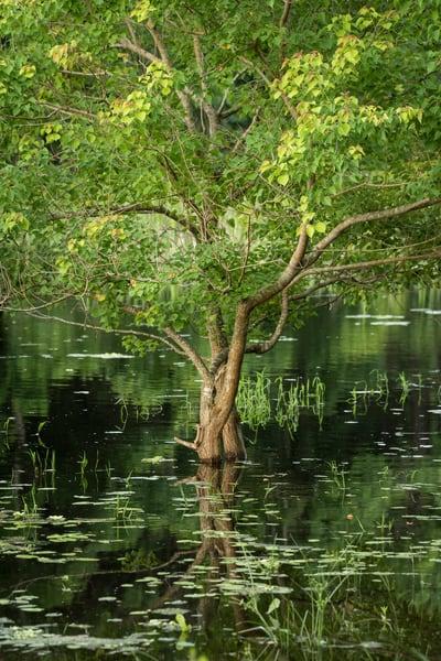 Tree Reflections Slough, Damon, Texas
