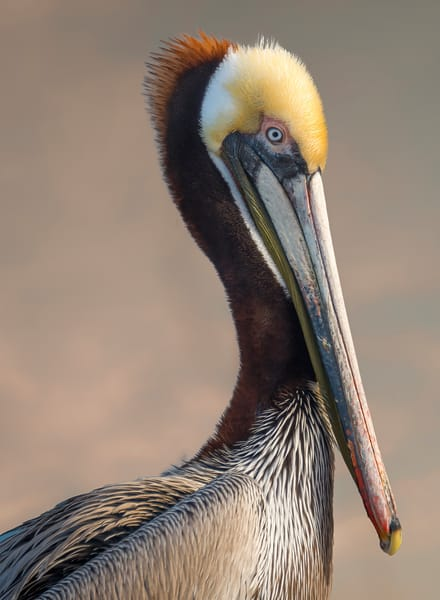 Pelican Photography Art | Kendall Photography & Fine Art