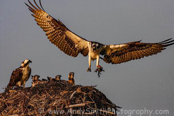 Fine Art Photographs of Raptors