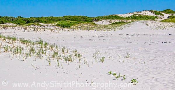 Beach to Dunes
