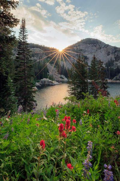 brighton wildflower sunburst