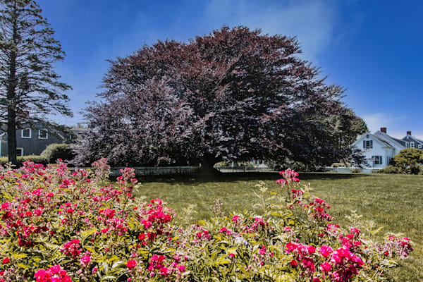 The Tree Photography Art | The Colors of Chatham