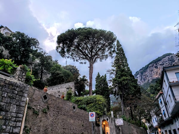A Tree Stands Out In Amalfi, Italy Photography Art   Photoissimo - Fine Art Photography