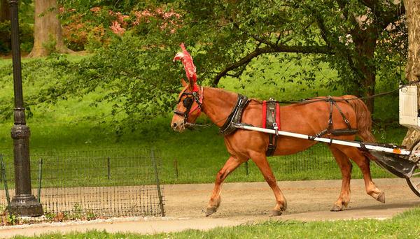 NY HORSE CARRIAGE RIDE ART