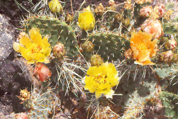 Prickly Pear: Contemporary Art | Lion's Gate Photography