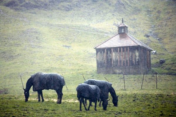 Horses in Samuel P. Taylor Park, West Marin