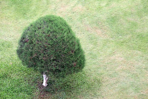 Tree on Green Grass in Vientiane, Study in Monochrome