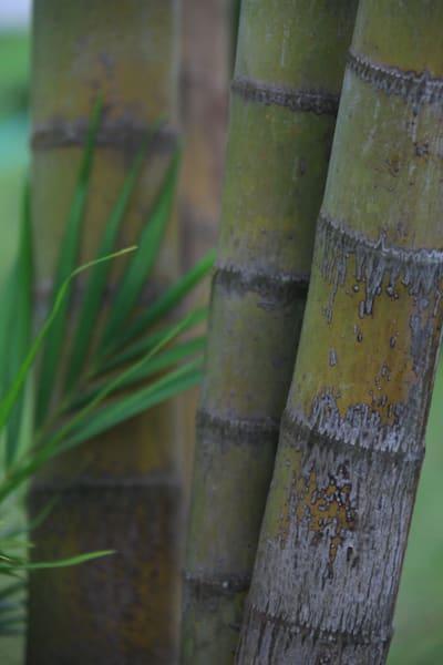 tree, laos, bamboo trunks