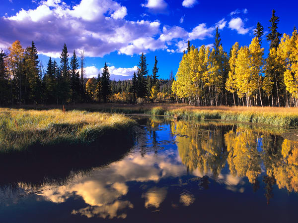 Duck Creek Beaver Pond Photography Art | Craig Primas Photography
