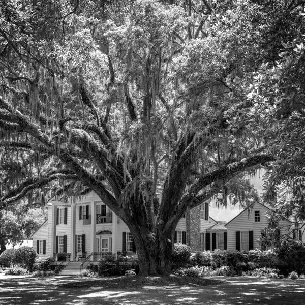 Davant Plantation Oak