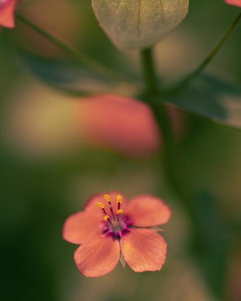 A Little Princess Photography Art   Tamea Travels