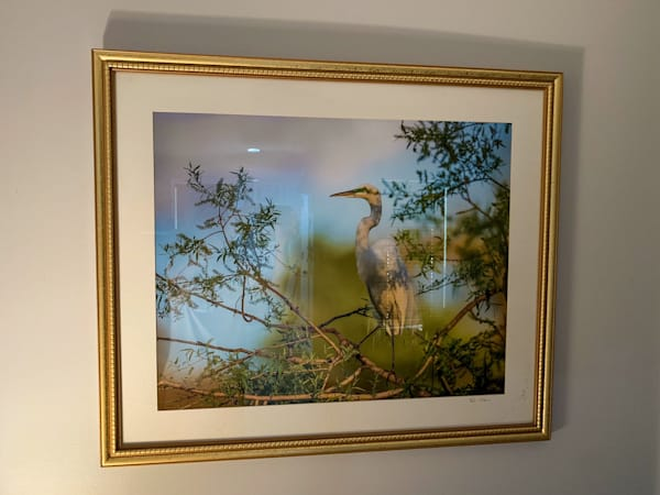 #20 Great Egret Pose Photography Art   Phil Heim Photography