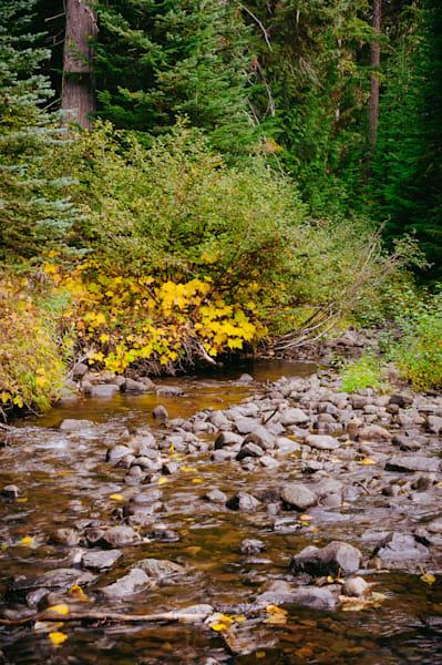 Early Autumn Colors, Upper Little Naches River, Washington, 2016