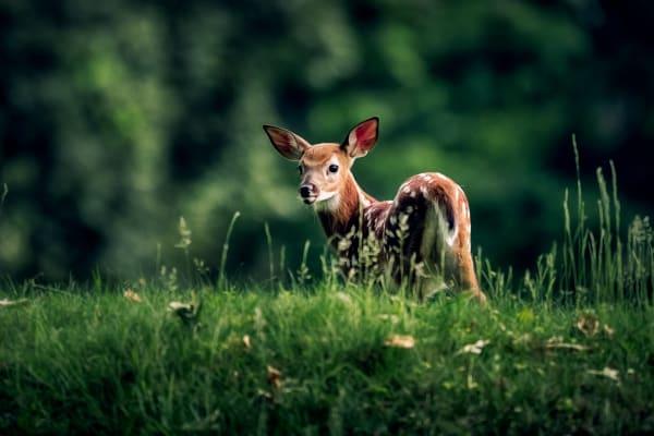 Exploring The Meadow Photography Art | Trevor Pottelberg Photography