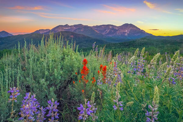 mill canyon summer wildflowers with timpanogos