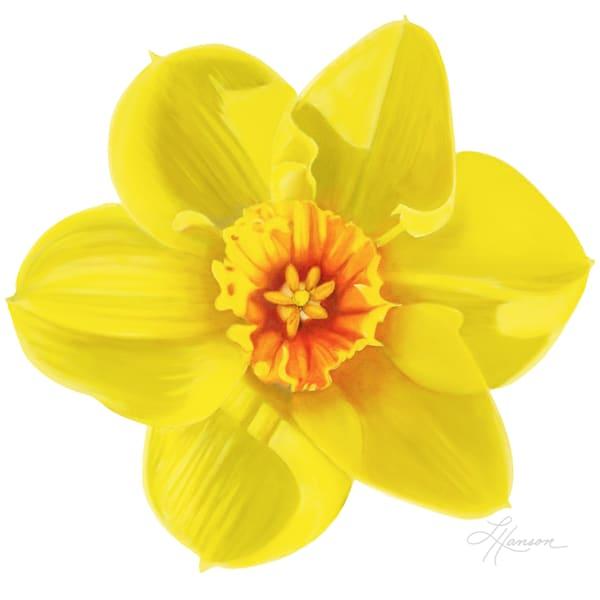 Daffodil  Art | Leanne Hanson Art