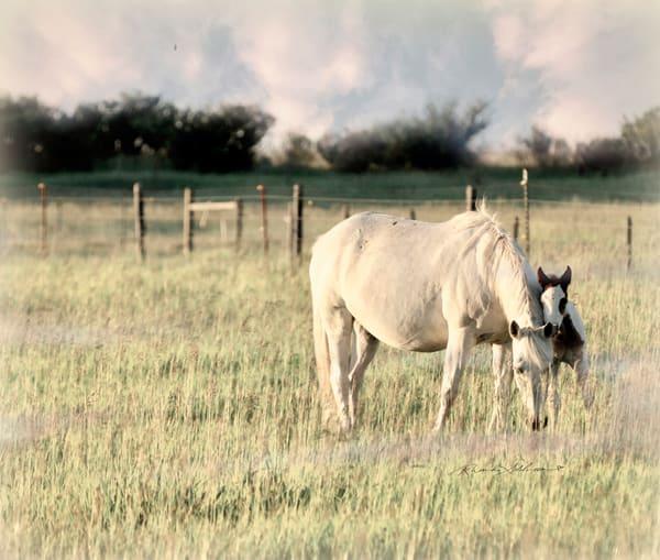 HORSE & COLT ON RANCH ART