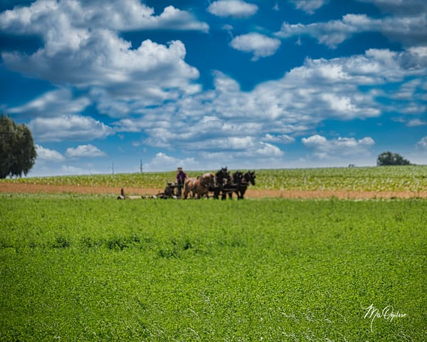 Plowing The Field Photography Art | It's Your World - Enjoy!