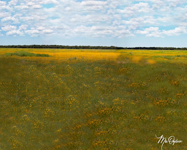 Meadow In Bloom  Photography Art | It's Your World - Enjoy!