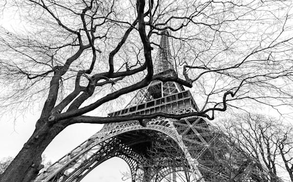 Wild Eiffel  Photography Art | Visual Arts & Media Group Corporation