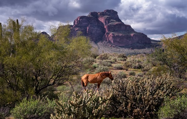Mustang At Red Mountain Photography Art | Kendall Photography & Fine Art