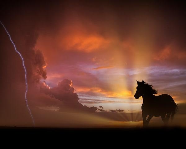 Dimmit Horse Art | Jim Livingston Art