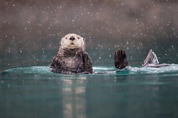 Sea Otter In Blue Green Water With Snow B8 R9450 Kachemak Bay Homer Ak Gigapixel Width 9600px Photography Art | Clemens Vanderwerf Photography