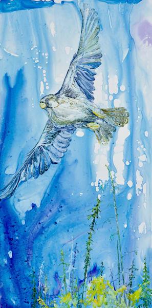 Gyrfalcon Art   Karen Bishop Artist