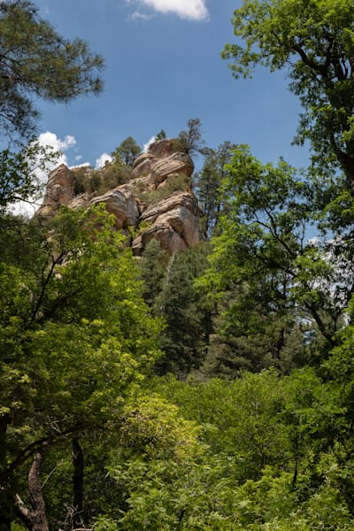 Rocks & Trees   Vertical Photography Art | Leiken Photography