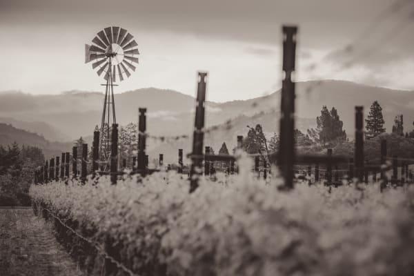 Old vineyard windmill