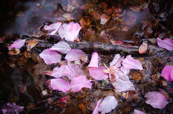 PNW Rain Flowers