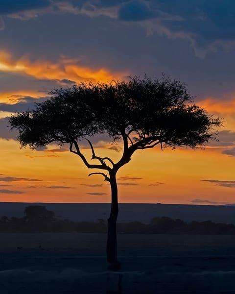 sunset tree-african sunset-janetogren