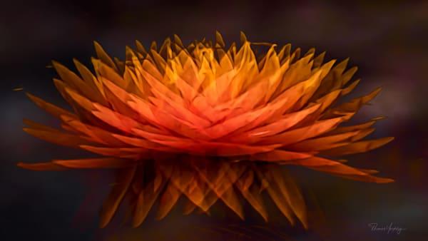 Polyphony Photography Art   Thomas Yackley Fine Art Photography