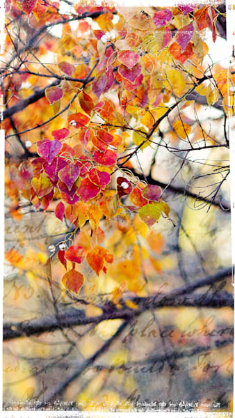 Cascade Of Leaves With Text Photography Art | TERESA BERG PHOTOGRAPHY