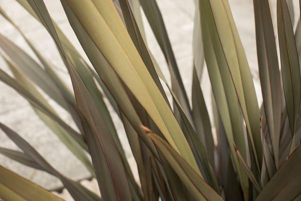 California Grass 3 Photography Art | TERESA BERG PHOTOGRAPHY