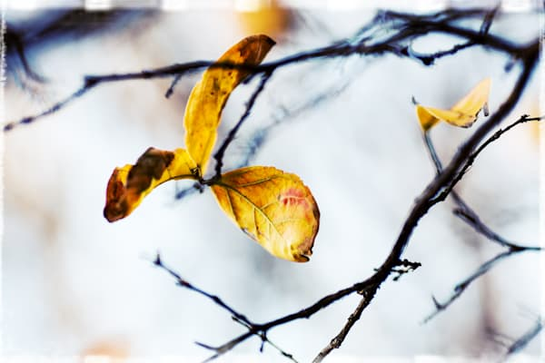 Cloudy Day Leaves 2 Photography Art | TERESA BERG PHOTOGRAPHY