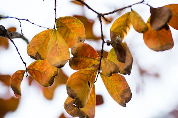 Cloudy Day Leaves Photography Art   TERESA BERG PHOTOGRAPHY