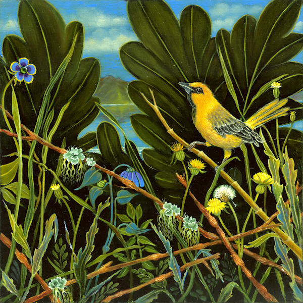 Yellow Bird Of Lake Chapala Art   miaprattfineart.com