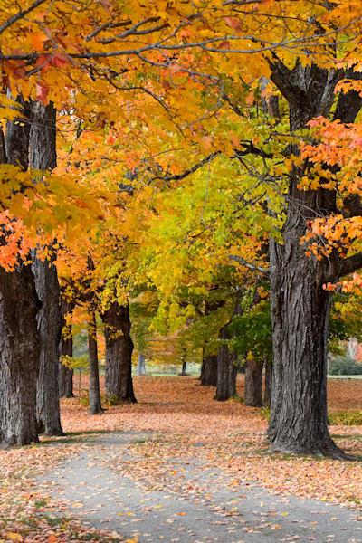 Trees/Fields LE
