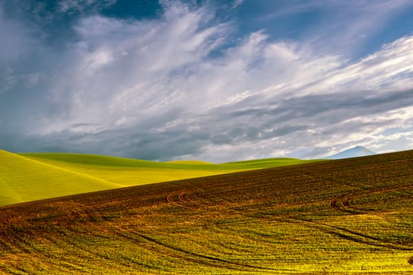 Steptoe Harvest