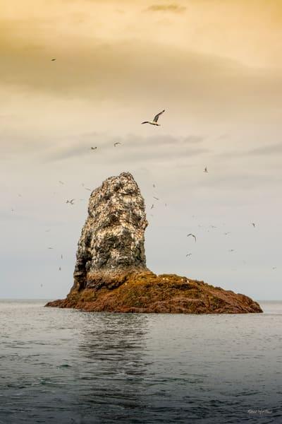 Gull Island  0257 Photography Art | Koral Martin Fine Art Photography