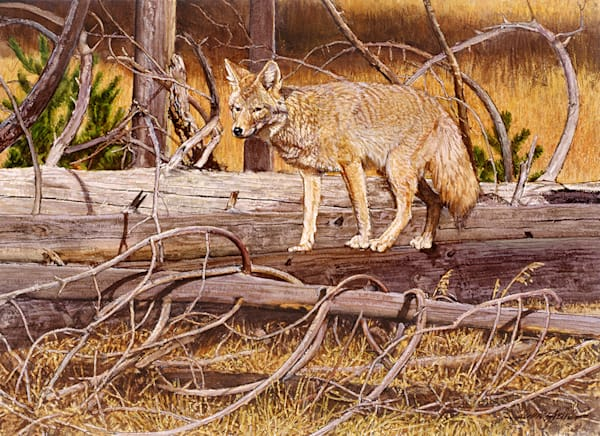 Wiley Coyote Art | Fine Art New Mexico
