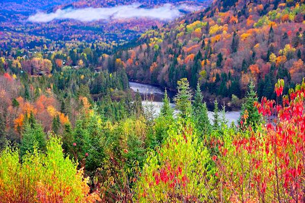 Autumn Color Art | Cincy Artwork